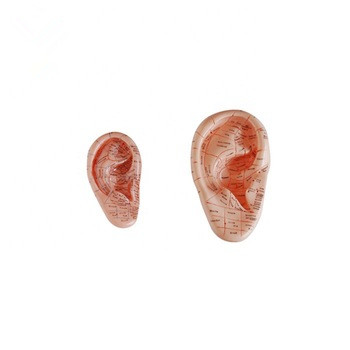 17cm Acupuncture Ear Anatomical <strong>Model</strong>
