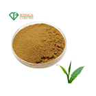 Natural organic green tea extract green tea extract powder Caffeine powder