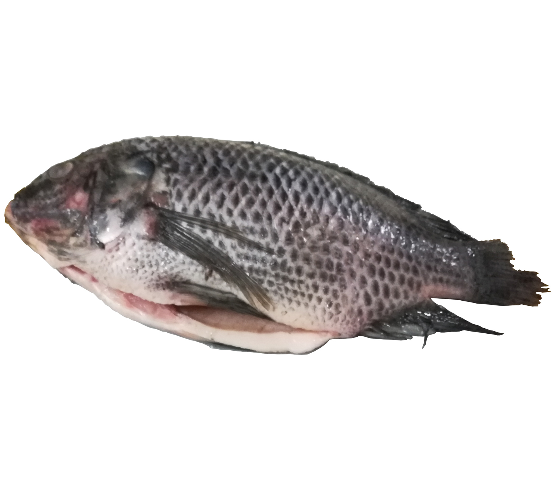 Grosir Harga Ikan Nila Beku untuk OK Makanan Laut