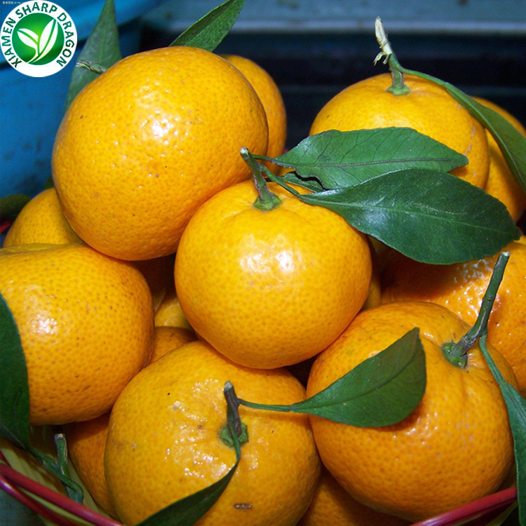 Wholesale Frozen Fresh Mandarin Orange