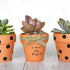 Brown Pot 3pcs Brown Clay Small Terracotta Plant Flower Pot