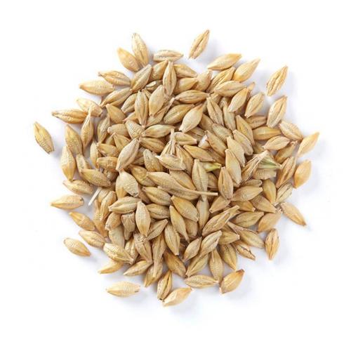 Russian Eco Barley