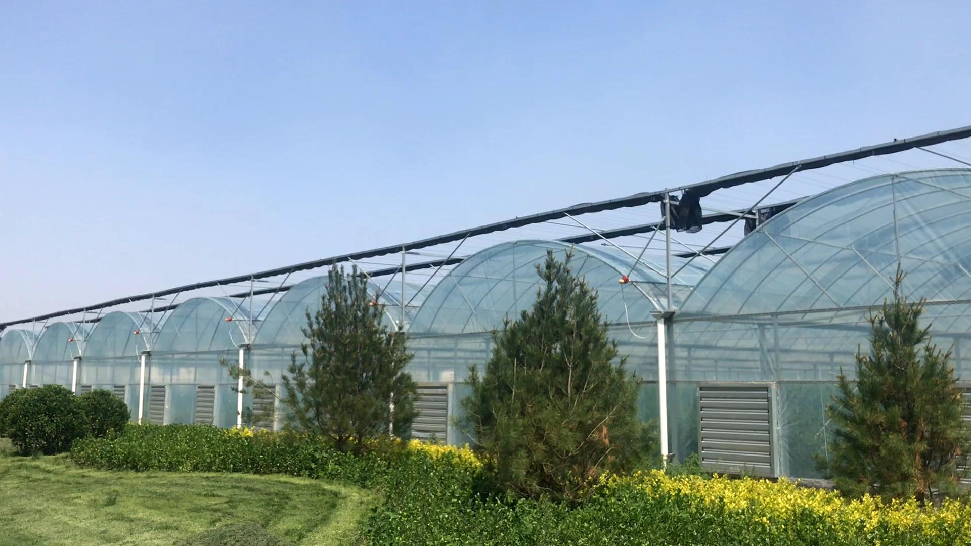 Typ Spitze Dach PC Blatt Multi-spannweite Gewächshaus