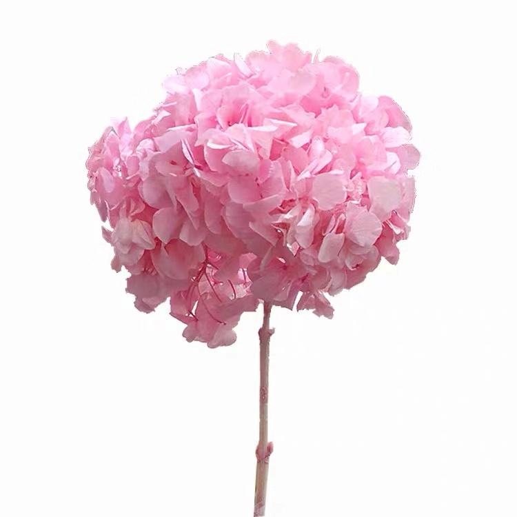 ยูนนานคุณภาพสูงมาใหม่ที่เก็บรักษาไว้ไฮเดรนเยียแห้งดอกไม้ไฮเดรนเยียขาย