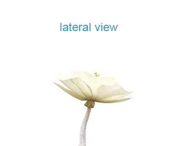 Natural Plant diffuser flower with many different shape