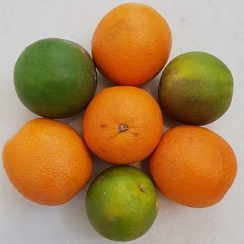 Buy Fresh valencia oranges