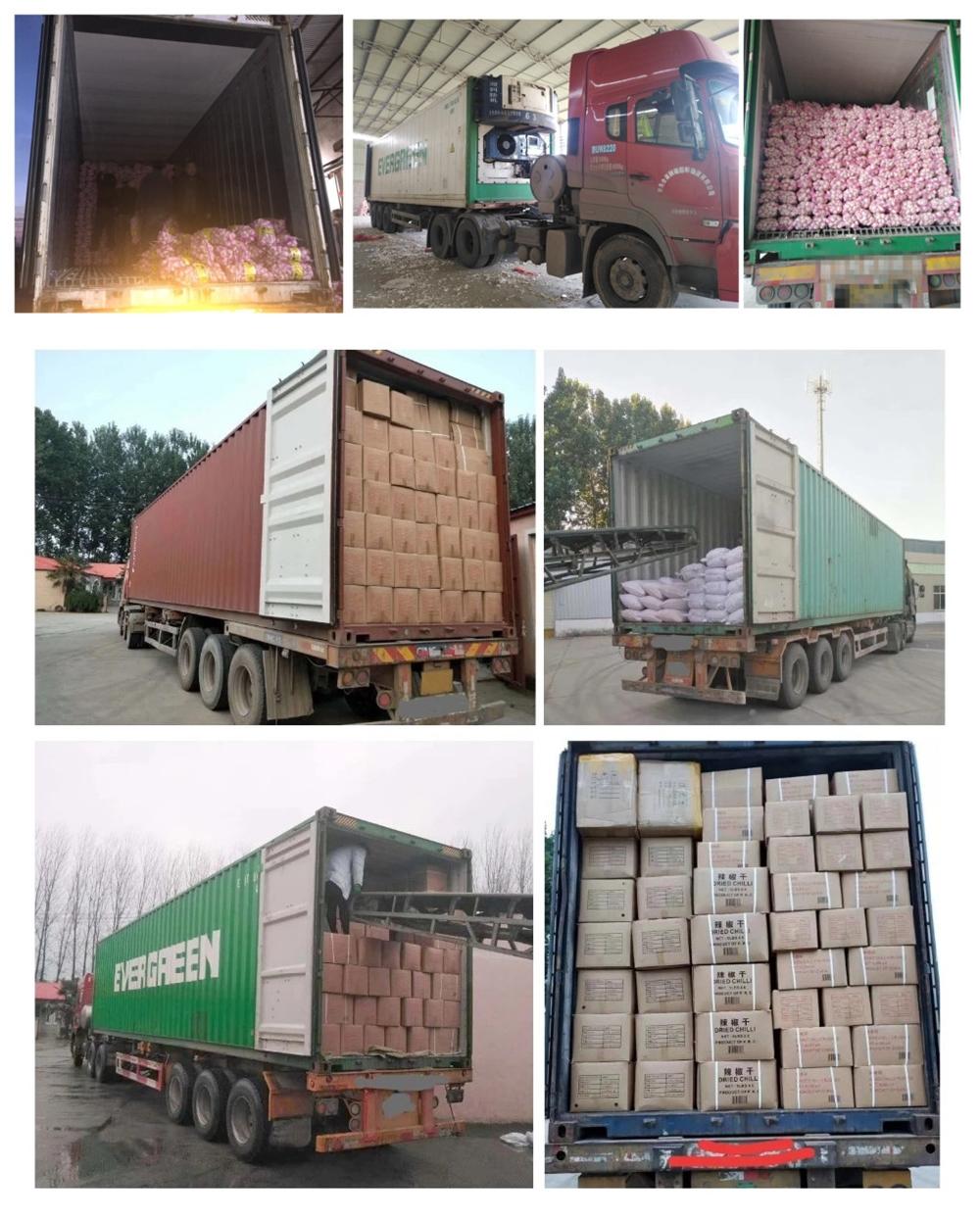 卸売高品質ホット販売広州新鮮なエジプトニンニクから大規模な生産