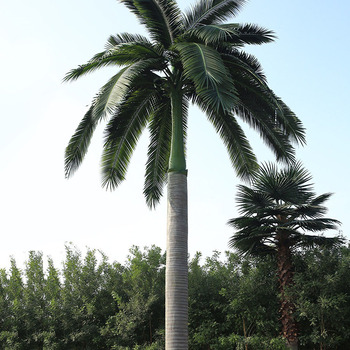 To The Life Custom Anti-ultraviolet Anti-fading Fiberglass Decorative Outdoor Plastic Royal Palm Tree Artificial