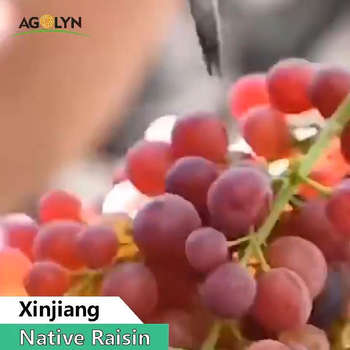 AGOLYN Best Price Chinese Natural Green Raisin Sun Dried Raisin