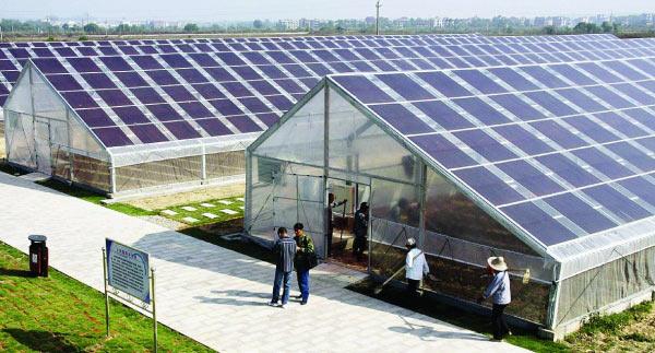 Низкая стоимость солнечных панелей фотоэлектрической теплицы солнечных панелей