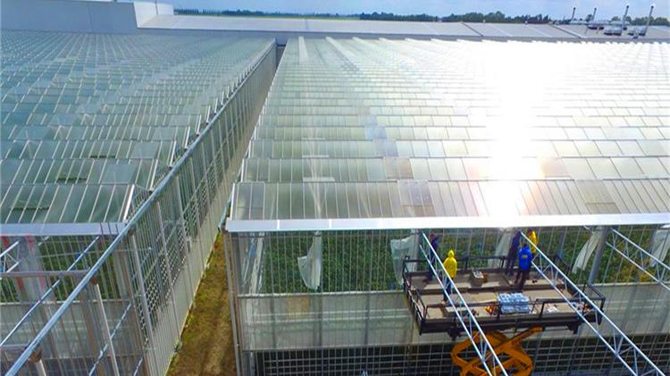 Çin metal yapısal çerçeve kenevir büyümek sera hidroponik ile ebb ve akış tabloları