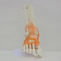 High quality Human Skeleton Model Life Size Foot Joint with Ligaments