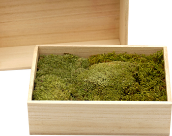 L freeze dried moss home accessories babyroom wall bedroom decoration