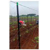 Flower vegetable seedling fruit tree and other agricultural frp stake pole tool