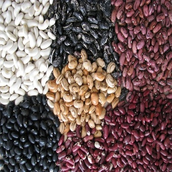Quality Light Speckled Kidney Pinto Beans / New crop Red beans / Dried Black Beans
