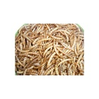 Food Mealworm Xin Jie Biotechnology Fish Mealworm And Premium Quality Food Healthy Protein Mealworms Dried