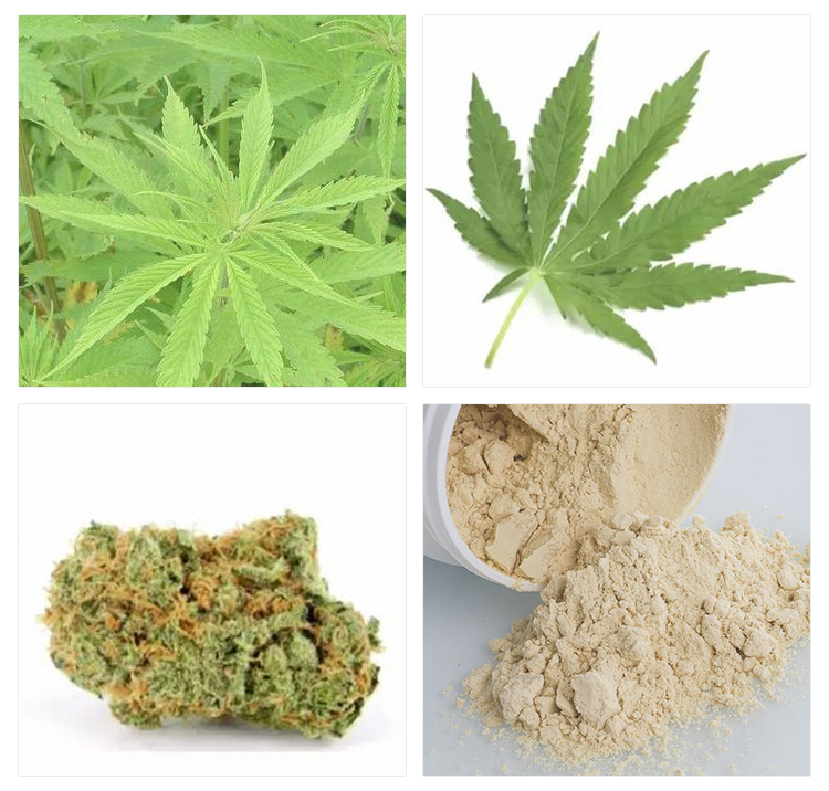 Конопля тестостерон сорт марихуаны блуберри