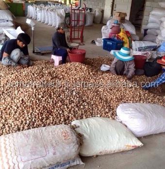 Indonesia High Purity Whole / Half Betel Nuts Areca catechu / Areca nuts