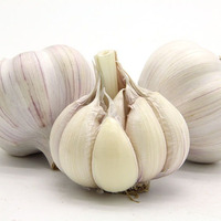 2020 AAA Fresh Normal White Garlic/alho/Ail/ajo/Jinxiang Jining