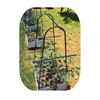 Vegetable Trellis Garden Plant Support Cages Stakes for Climbing Plants Fruits Vegetables Vine Flowers