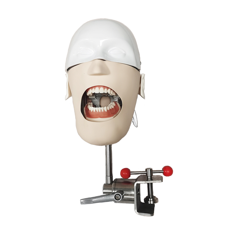 Teaching <strong>model</strong> of dental simulation head YJ709
