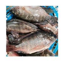 Frozen Tilapia Whole Round 100-200g Fresh Fish