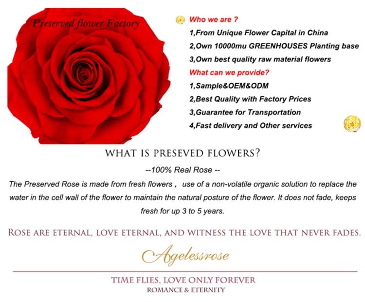 Usine personnalisée OEM Verre emballé trois éternelle rose fleurs immortelles cadeaux de fête des mères