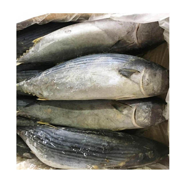 High Quality Frozen Bonito Skipjack <strong>Fish</strong> Tuna <strong>Fish</strong> for Sale