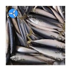 SANFENG SEAFOOD New Catching Fresh Seafoods Frozen Pacific Mackerel Fish