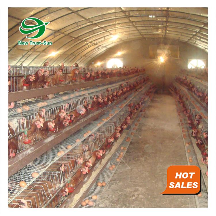 कम लागत चिकन अंडे बिछाने परत पिंजरे पोल्ट्री खेती