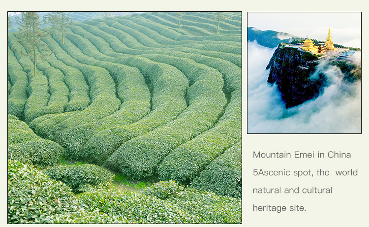 Best Quality Natural White Tea Cake Wholesale Prices Fujian Province White Tea Loose Leave - 4uTea | 4uTea.com