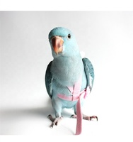 Adjustable bird with flight belt flight with tow rope training parrot with parrot tow rope
