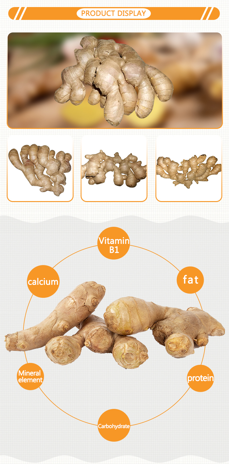 Hot Sale Air Dried Ginger For Wholesale