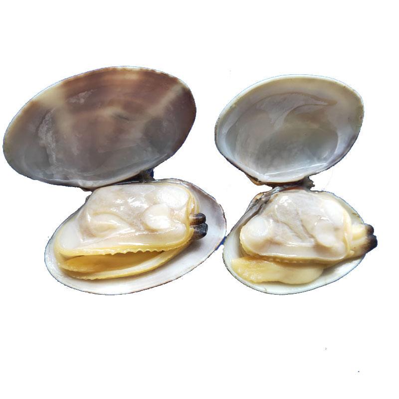100% custom pass rate superior frozen short necked clam