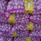 wholesale fresh garlic price