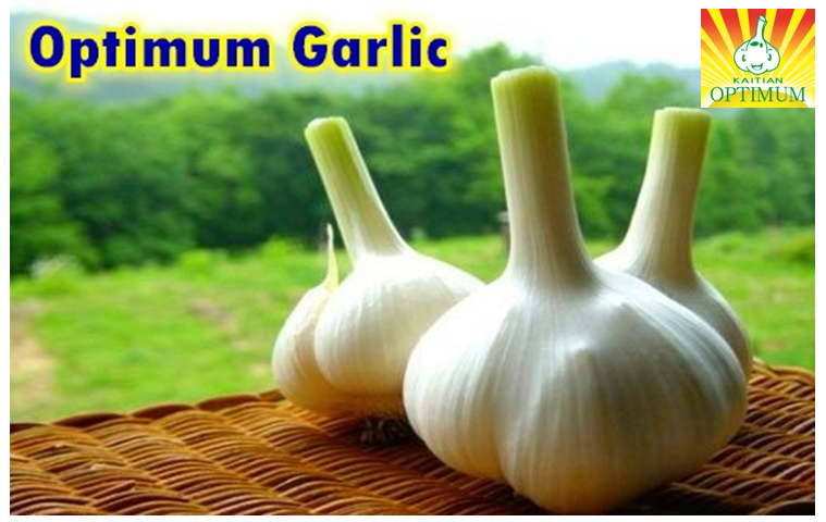 New crop big size fresh garlic for import from China