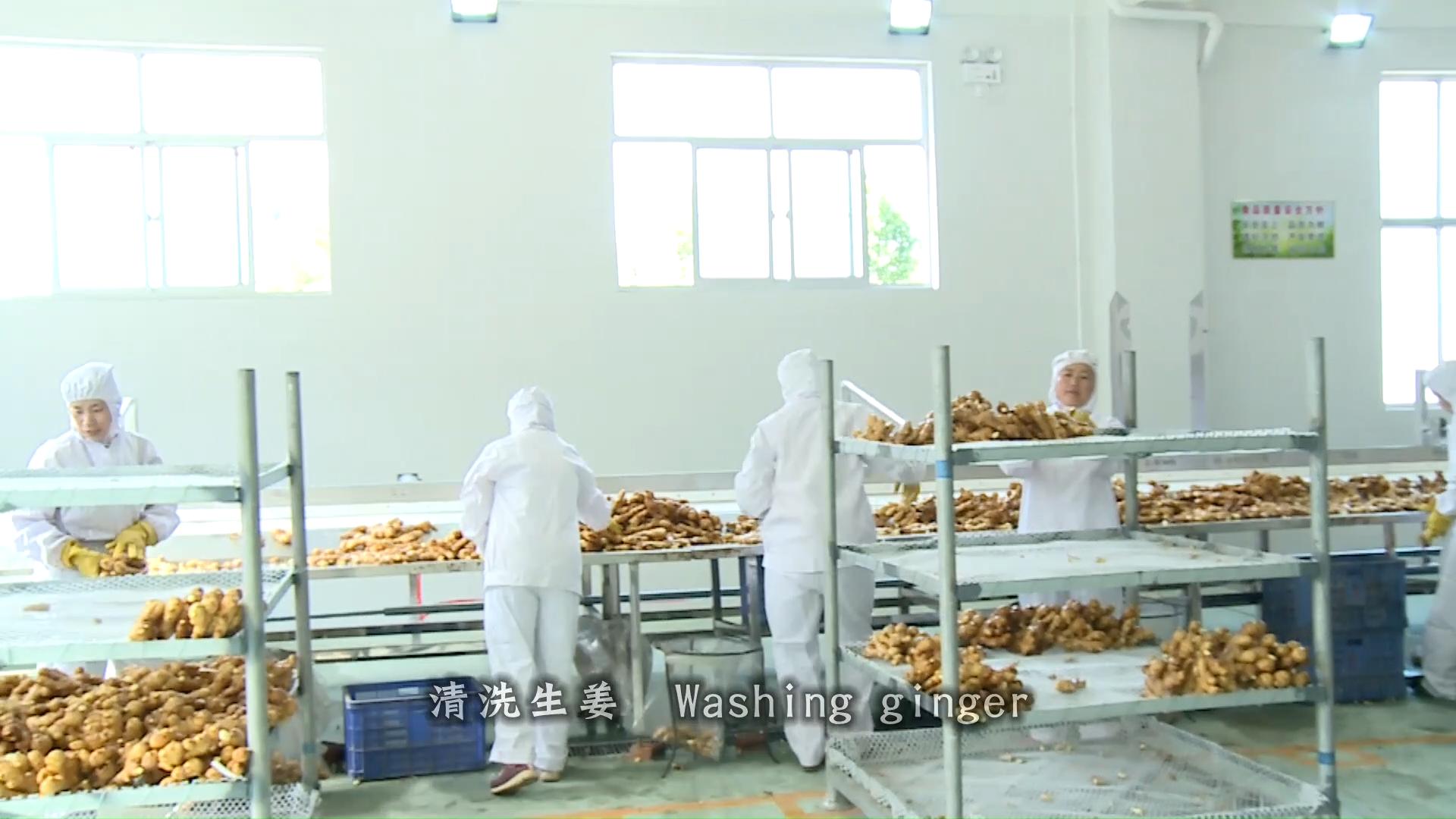 Chinese Organic Fresh Ginger Price