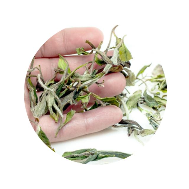 Wholesale Famous Brands Organic Loose Leaf White Peony Tea - 4uTea | 4uTea.com