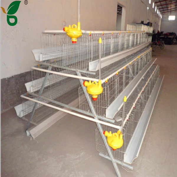 Egg Production Poultry Farming Equipment Layer Chicken