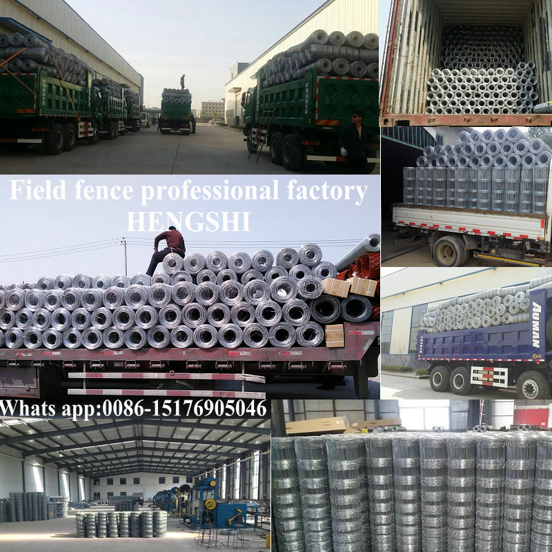 Cheap 3ft 4ft 5ft 6ft 7ft 8ft galvanized 50m/100m field fence price