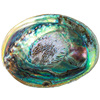 Polished Clam Natural Large Abalone Shell For Jewelry Storage Soap Box Fish Tank Decoration
