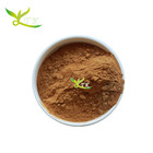 High Quality Spinach Leaf Powder Extract