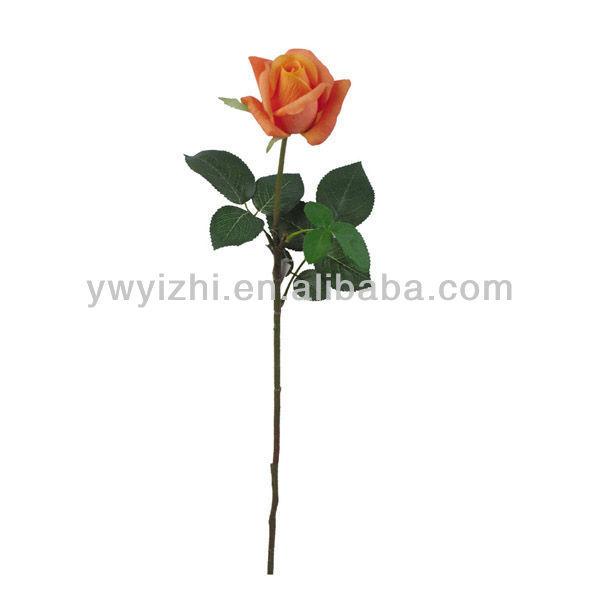 rose bud with stem wwwpixsharkcom images galleries