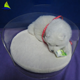 Customized shape acrylic clear cat bed pet bed