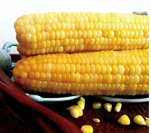 100%Maturity and Common Cultivation Type fresh corn for sale yellow and white fresh waxy corn