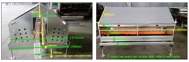 Poultry Double Side or Single Side Automatic  Egg Nest Collection System/laying hen nest