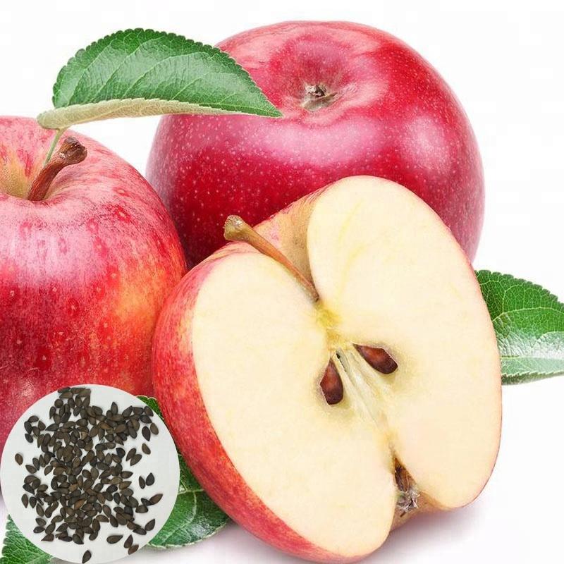 Яблоко с листиком картинка