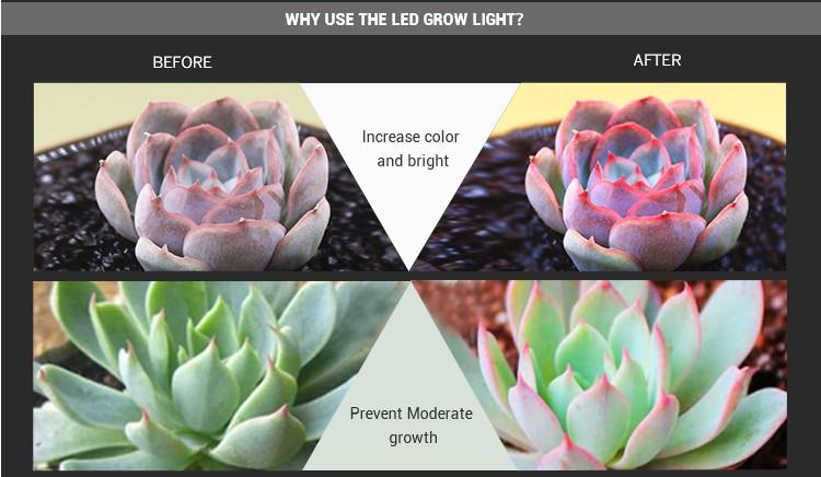 2019 Shenzhen nuovo modello Dual Chip di 600 w 1200 w 1500 w 1800 w 2000 W led coltiva la luce full spettro di luce della pianta del led per la coltivazione indoor
