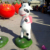 China suppliers fiberglass New product cartoon Lively cow sculpture for home & garden decor