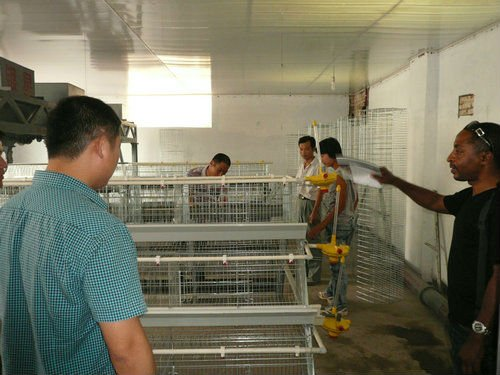 Cage Chicken Farm Design of raising layer/broiler project
